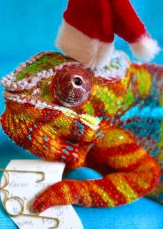 Top 10 Weird and Exotic Animals Wearing Santa Hats Silly Holidays, Silly Dogs, Exotic Pets, Exotic Animals, Pet Costumes, Christmas Animals, Santa Hat, Amphibians, Dog Toys