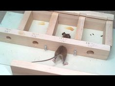 Experimenting with how small a home a mouse is able to fit through. But it didn't go as planned. I had a lazy mouse, and a hard working invading shrew. Getting Rid Of Mice, Mouse Hole, Easy Bird, Pot Belly Pigs, Oddly Satisfying Videos, Mouse Traps, Energy Saver, Felt Mouse, Brain Waves