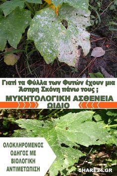 Μυκητολογική Ασθένεια Ωίδιο – Γιατί τα Φύλλα των Φυτών έχουν μια Άσπρη Σκόνη πάνω τους & Πώς να το Αντιμετωπίσω! Permaculture, Herbs, Flowers, Plants, Diy, Gardening, Lawn And Garden, Bricolage, Herb