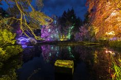 Enchanted Forest II - Enchanted Forest in Pitlochry, Scotland.  LE shot with the Fuji XT1 and a 10-24mm Lens.