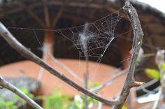 Spider at Playa Viva