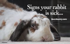 How to tell if your bunny is unwell.... The quicker you spot the signs the better. Find out what these signs are here... http://best4bunny.com/signs-rabbit-sick/