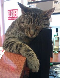 Photos: 21 Of Our New Favorite Bodega Cats (And Keep Your Photos Coming!): Gothamist