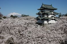Entre modernité et tradition, le Japon est un pays qui surprend. Lors de votre séjour, vous découvrirez l'art de vivre à la japonaise : se balader entre les cerisiers en fleurs, admirer l'architecture de Tokyo ou d'Osaka, visiter un temple, etc. Une chose est sûre : vous ne vous ennuierez pas lors de votre voyage au Japon.  © 2014. All Rights Reserved - office du tourisme du Japon  www.ilesparelles.fr www.tourisme-japon.fr
