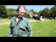 WSPA Cow Dance at Glastonbury