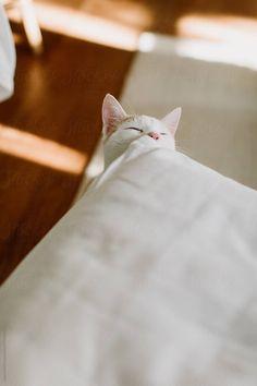Like A Cat, Cat Love, Bright Rooms, Kitten, Cushions, Stock Photos, Cats, Cute Kittens, Throw Pillows