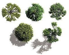16 Architecture Plan Trees Vector Images - Vector Trees Plan View, Vector Top View Trees Plans and Top View Trees Plans Landscape Elements, Landscape Plans, Landscape Design, Tree Psd, Vector Trees, Photoshop Rendering, Photoshop Design, Architecture Graphics, Architecture Drawings