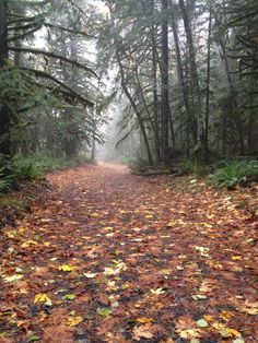 Teapot Hill Trail (The most popular hike in Cultus Lake Provincial Park)  #hiking #trail #forest