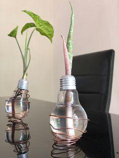 Light Bulb Plant, Planting Bulbs, Diffuser, Plants, Plant, Planets