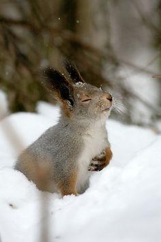 me luvs snow.