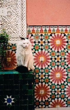 Tiles and cats in Marrakech, Morocco Interior And Exterior, Interior Design, Interior Modern, Moroccan Style, Moroccan Theme, Morrocan Decor, Moroccan Stencil, Moroccan Colors, Moroccan Lanterns