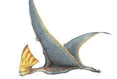 TAPEJARA | tapejara meaning old being in tupi was a pterosaur that dates from the ...