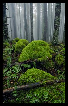 Foggy Forest Mossy Foggy Forest You can just imagine the cool air surrounding this area.Mossy Foggy Forest You can just imagine the cool air surrounding this area. Foggy Forest, Dark Forest, Moss Garden, Succulents Garden, Walk In The Woods, Parcs, Amazing Nature, Mother Earth, The Great Outdoors