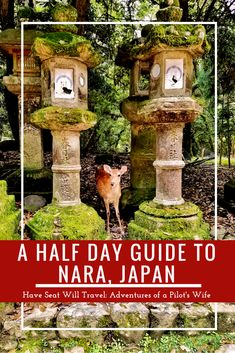 Have you ever wanted to get up close and personal with deer? Get your fill of adorable and friendly deer by the hundreds in Nara, Japan! Japan Travel Guide, Asia Travel, Eastern Travel, Travel Pics, Japan Destinations, Amazing Destinations, Pilot Wife, World Travel Guide, Travel Guides