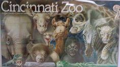 Cincinnati Zoo babies poster