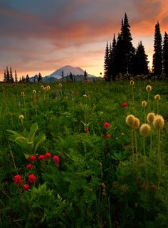 woodendreams:  (by MLDAwsonImages)  Always in awe of God's beautiful creation!