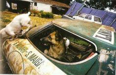 Lancia Stratos - remnants!