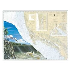 Steve Whitlock Nautical Chart Art - Everglades Snook