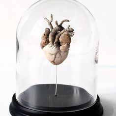 "Natalia Lubieniecka Textilart su Instagram: ""My next object in a glass dome! This time it's a human heart. Look in my Etsy store link in bio 👍🏻"" Human Heart, Glass Domes, Etsy Store, Snow Globes, Anatomy, Link, Instagram, Home Decor, Homemade Home Decor"