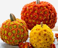Chrysanthemums + pumpkins autumn decoration