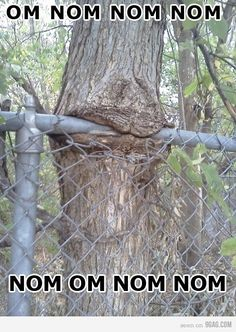 OMG !!  Get the chainsaw it's eating the fence !!