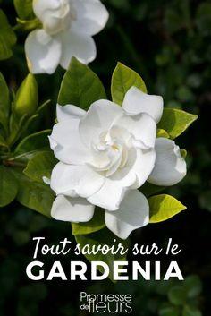 Les 7 meilleures images de Fleurs odorantes | Fleurs ...