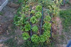 Microferma ecologica Biodumbrava Magazine, Plants, Magazines, Plant, Planets, Warehouse, Newspaper