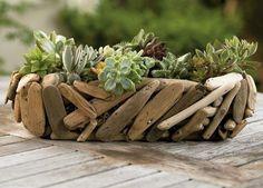 Blumentopf für Sukkulenten aus Treibholz