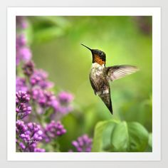 Buy Hummingbirds Welcome by Christina Rollo as a high quality Art Print. Worldwide shipping available at Society6.com. Just one of millions of products available.