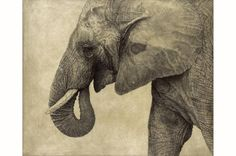 African Bush Elephant I / Loxodonta africana / 2008 / 52 x 61 cm / Pencil on panel Animal Sketches, Animal Drawings, Art Drawings, Pencil Drawings, Ganesha, African Bush Elephant, Amur Leopard, Elephant Art, Wildlife Art