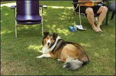 Studies Have Linked Lawn Pesticides with Canine Malignant Lymphoma - Whole Dog Journal Article ~ *R we surprised ?* ....... NO WONDER school playgrounds are going organic.  some current statistics suggest 1 in 3 dogs will develop cancer .... here's one way to lower the odds ~ don't buy & use this stuff & find out what your community's parks are using