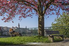 Pictures made during spring in Luxembourg by local photographer Christophe Van Biesen.