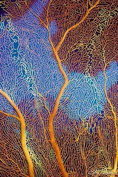 Gorgonian Sea Fan ~ as seen in 2014 Nature Design slimline wall calendar… Patterns In Nature, Textures Patterns, Nature Pattern, Beautiful Patterns, Africa Nature, Nature Design, Illustration Inspiration, Fotografia Macro, Macro Photography
