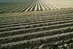 Ploughed field, via Flickr.