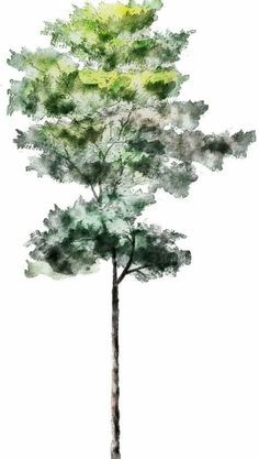 watercolor photoshop trees - Google Search