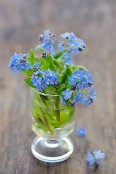 forget-me-not [Myosotis sylvatica] - forget-me-not [Myosotis sylvatica] in vase Little Flowers, Blue Flowers, Beautiful Flowers, Arrangements Ikebana, Floral Arrangements, Forget Me Not, Lily Of The Valley, Flowers Nature, Pansies
