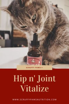 Designed to help protect, help relieve and help rejuvenate your cats joints. The Scruffy Paws Hip & Joint Vitalize Drops expertly combine 4 of the most effective, scientifically backed joint support ingredients into 1 to offer a FULL SPECTRUM support. When taken regularly the formulation can help reduce pain, swelling and stiffness. Support joint flexibility and mobility, and can help maintain healthy cartilage and connective tissue! Cool Cat Toys, Cool Cats, Baby Cats, Cats And Kittens, All Types Of Cats, Cat Diet, Cat Nutrition, Silly Cats, All About Cats