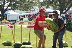 watermelon contest record - Поиск в Google