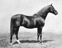 Bend Or(1877)(Colt)Doncaster- Rouge Rose By Thormanby. 5x5 To Stockwell & Muley. 14 Starts 10 Wins 2 Seconds. Won Epsom Derby(Eng), St James's Palace S(Eng), Epsom Gold Cup(Eng), Champion S(Eng), City And Suburban S(Eng), Richmond S(Eng). Leading Broodmare Sire In England & Ireland In 1901 & 1902. Died In 1903.
