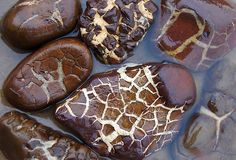 """Septarian stones - Septarian (also known as Dragonstone) gets its name from the Latin word """"saeptum"""", which means a small wall or enclosure. The mineral-filled cracks that divide the walls of the septarian concretion give this stone a distinctive appearance."""