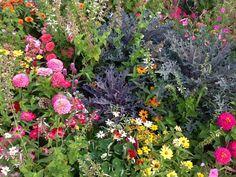 Flower garden idea for next year