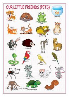 Pets #1 (Picture Dictionary)
