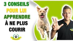 Totalement, Aide, Dressage, Dogs, Happy Dogs, Animaux, Puppies, Rat Dog, Doggies