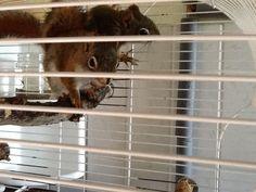 Mijn eekhoorns