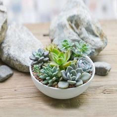 White ceramic round Succulent planter by Cloud Design US
