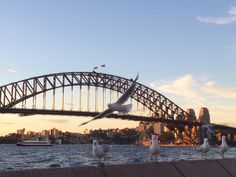 The First 48 | Sydney, Australia - 2 days in Sydney #sydney #australia #48hours
