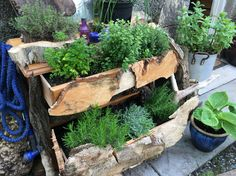 Herb garden from recycled old drawer unit