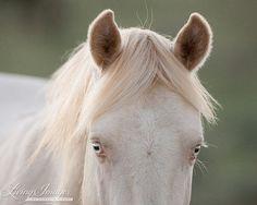 Cremosso's eyes by Carol Walker www.LivingImagesCJW.com