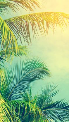 20 Lovely Summer Phone Wallpapers