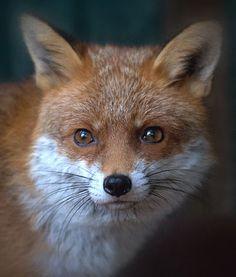 bobby_fox_small